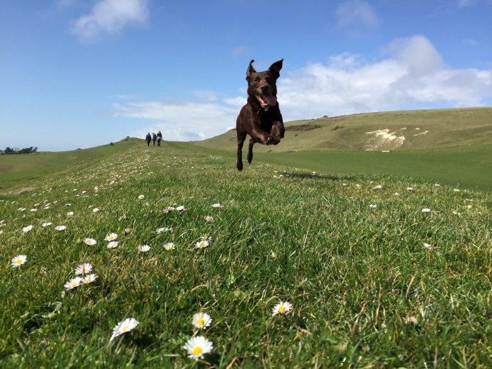 Dog friendly cottages on the Isle of Wight